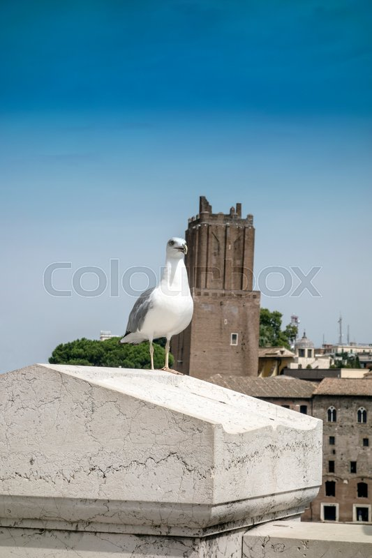 Stock image of 'yellow legged-gull standing on the top of house '
