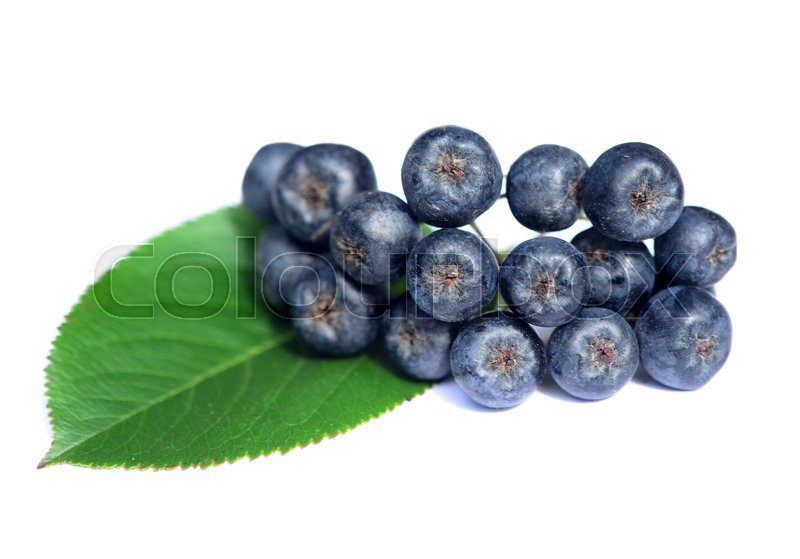 Stock image of 'chokeberry in closeup on a white'