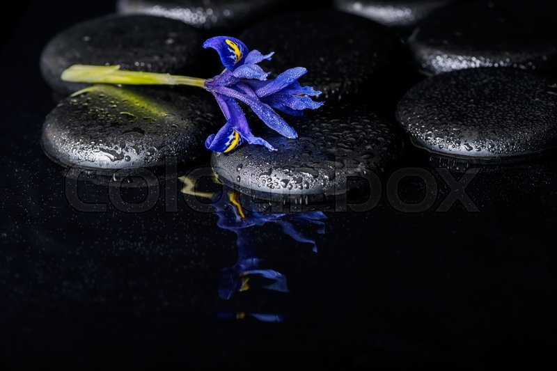 Image result for blue iris flower reflection in water