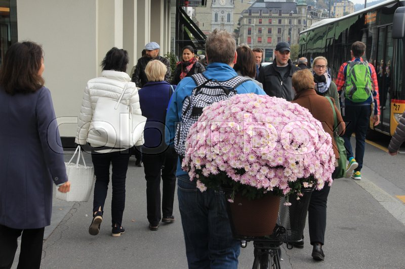 Editorial image of 'The man with his bike has a huge flower pot with blooming pink New York aster at his luggage carrier in one of the streets in the city Lucerne in Switserland in the summer.'