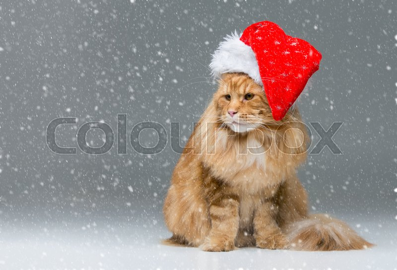 Stock image of 'Big ginger maine coon cat in christmas santa cap sitting over snow background. Copy space.'