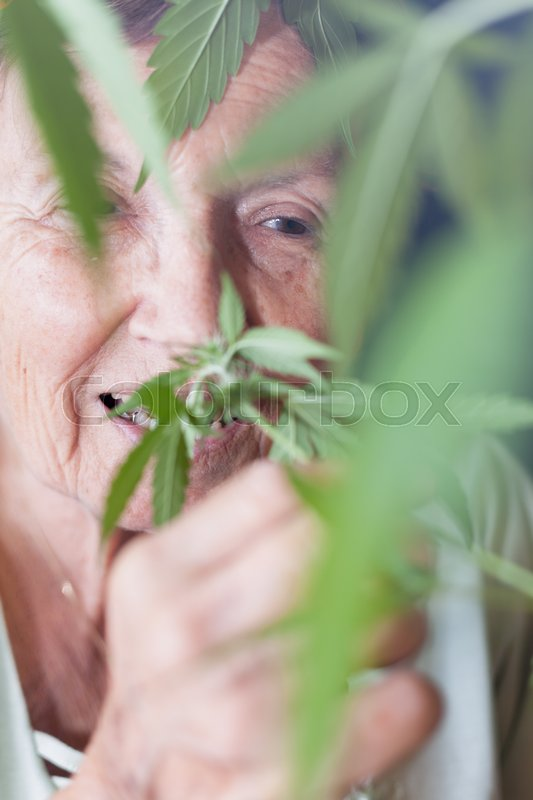 Stock image of 'Closeup of happy senior woman smelling Cannabis plant.'