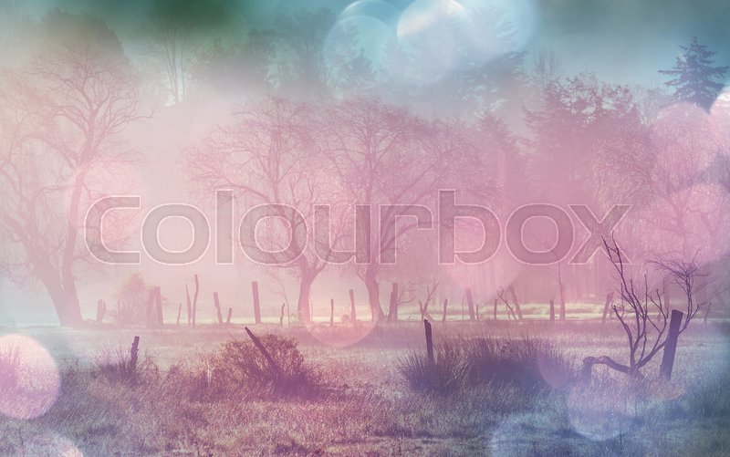 Stock image of 'Foggy meadow in the synny morning with light spots.'