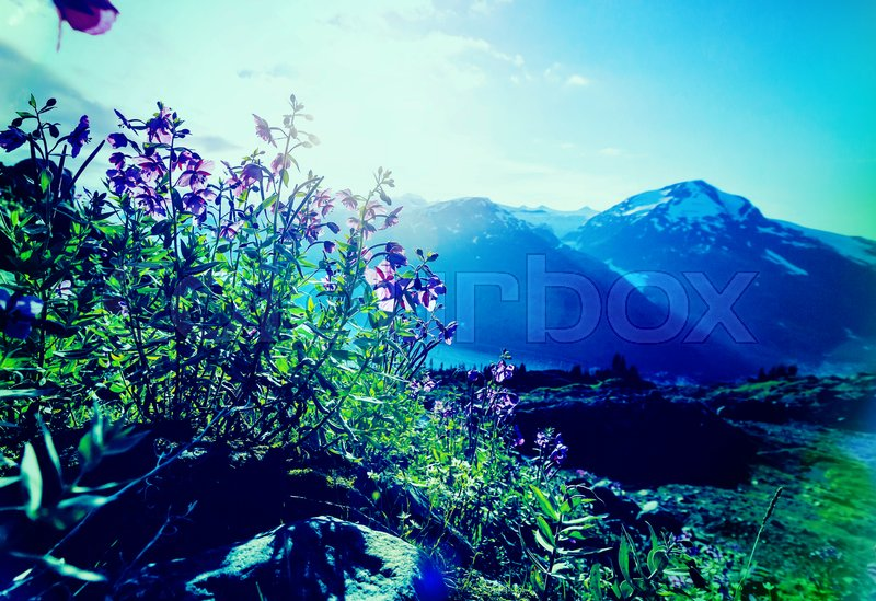 Stock image of 'Mountain meadow in sunny day'