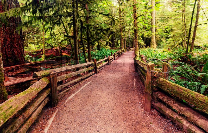 Stock image of 'Rain forest in Vancouver island, British Columbia, Canada'