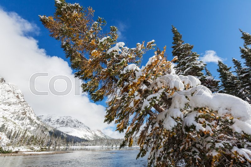 Stock image of 'Early winter with first snow covering rocks and woods in the Glacier National Park, Montana, USA'