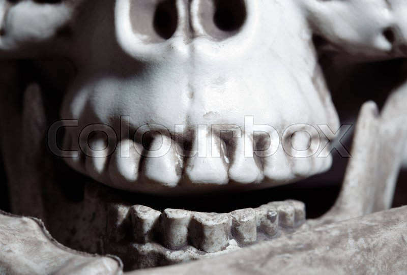 Stock image of 'Close-up horizontal photo of the human skull'