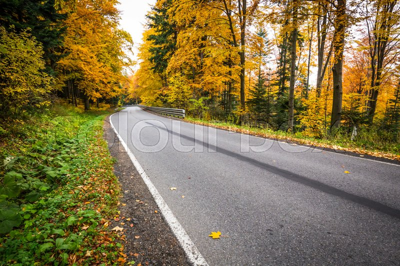 Stock image of 'Autumn landscape with road and beautiful colored trees'