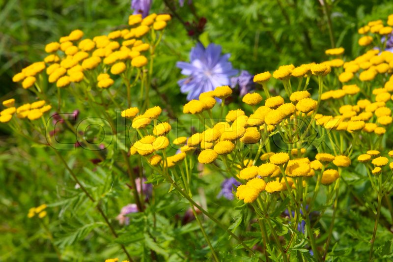 Stock image of 'Yellow flowwers in sunlights'