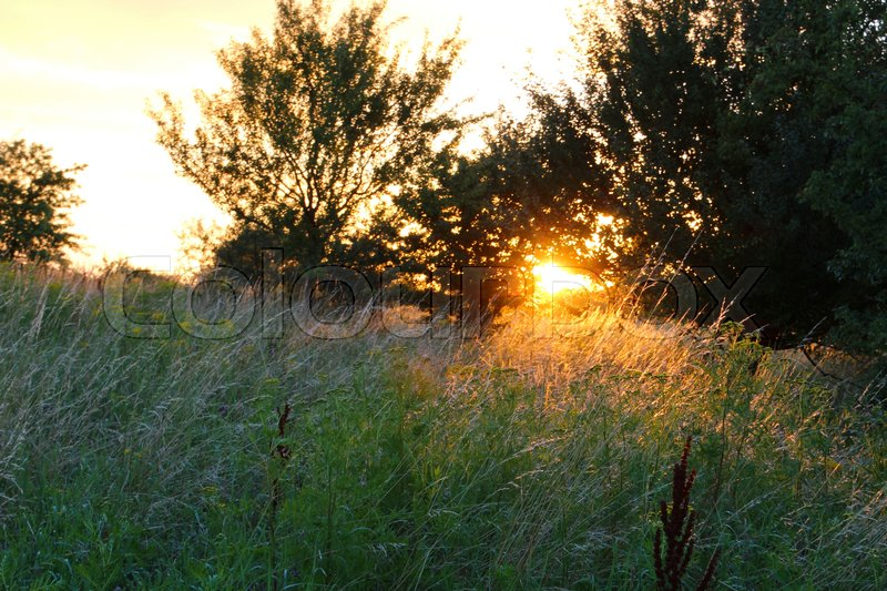Stock image of 'Sunbeams find some grass straw in the sunset'