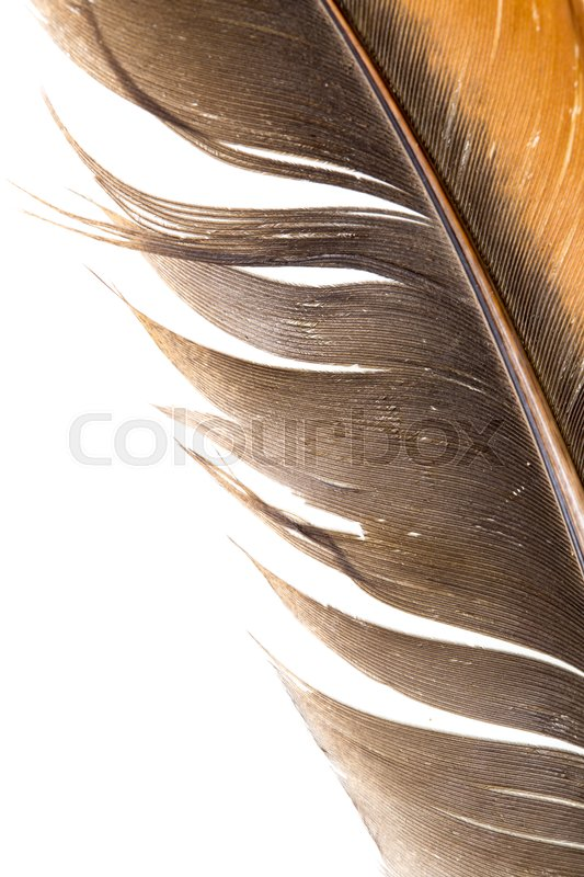 Stock image of 'Beautiful feather on white background'