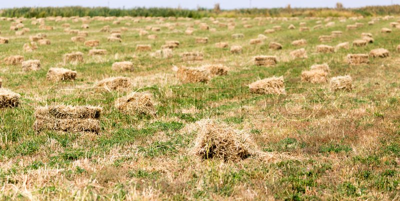 Stock image of 'Bales of hay in the field'