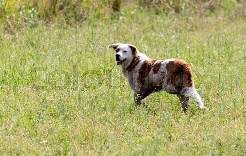 Stock image of 'Dog running on grass outdoors'