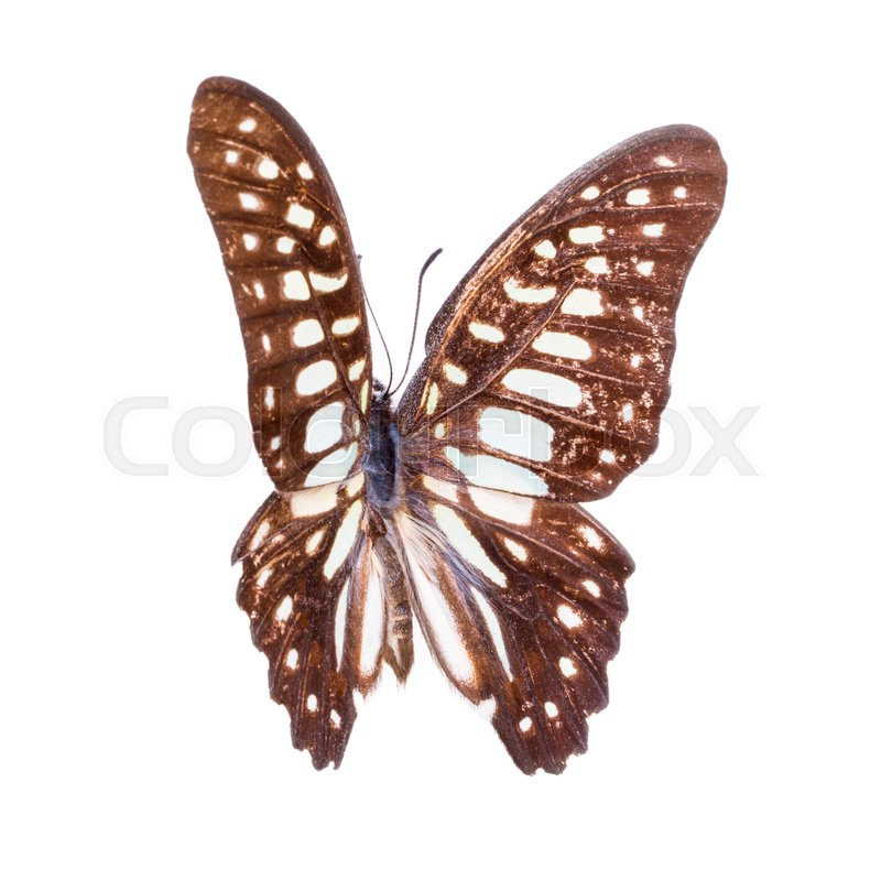 Stock image of 'Beautiful colorful butterfly. Moth isolated on white. '