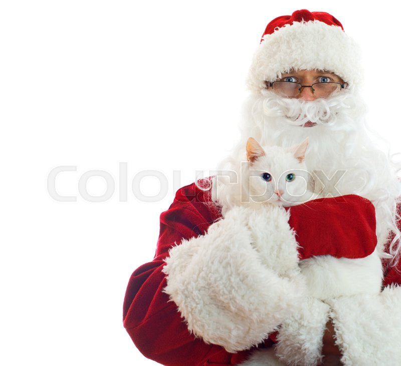 Stock image of 'Santa Claus holding white cat. Space Isolated on white background.'