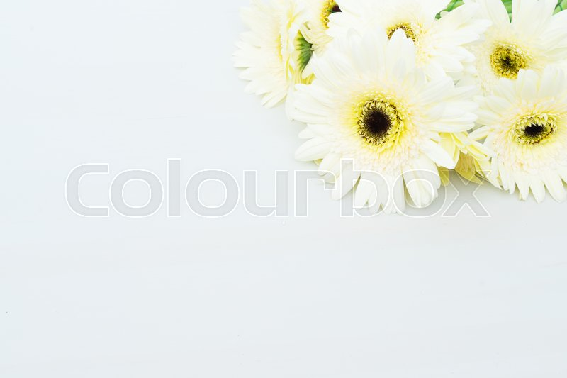 Stock image of 'Beige gerbera flowers on gray wooden table'