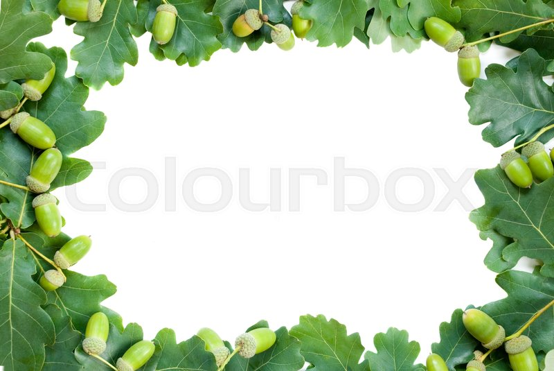 Stock image of 'Frame of green oak leaves and acorns'