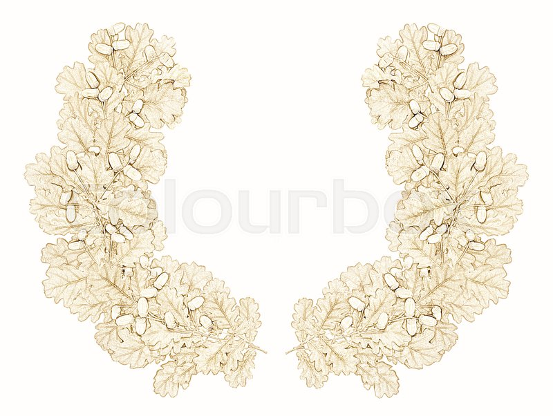 Stock image of 'wreath of oak leaves on a white background'