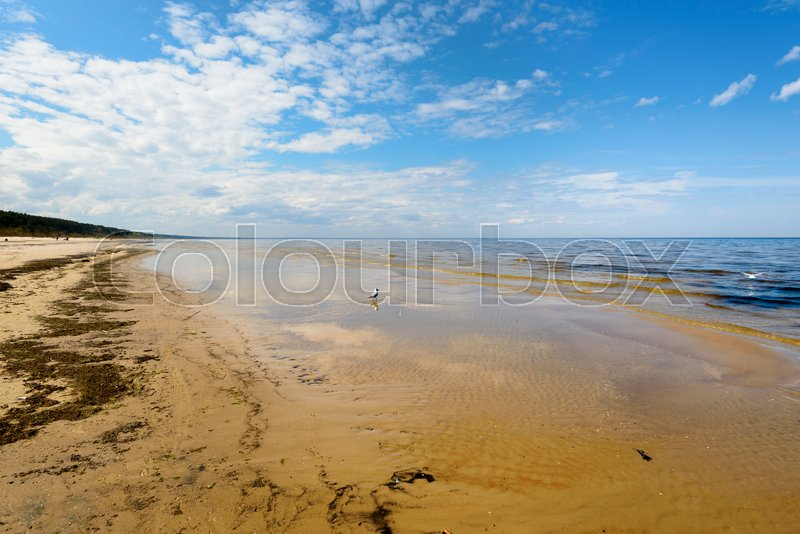 Stock image of 'Deserted coast of the Baltic Sea in the early spring. Seagulls'