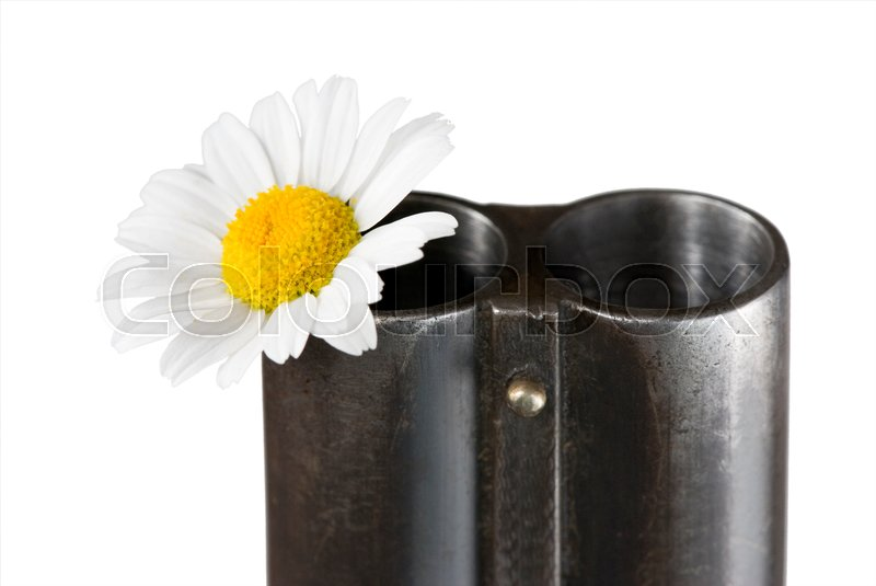 Stock image of 'Flower of a camomile in a trunk of a fowling piece'