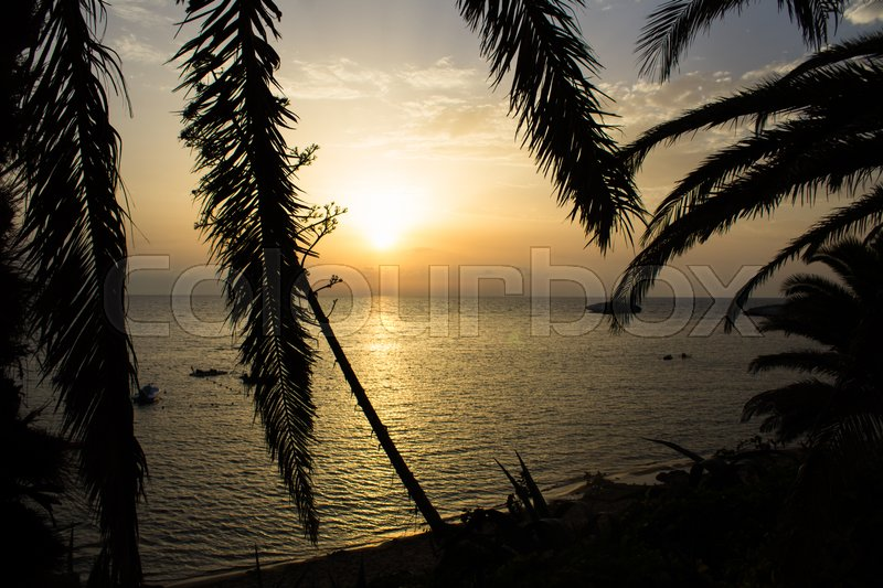 Stock image of 'mediterranean sea at sunset with small boats and shadows of palm trees and other vegetation'