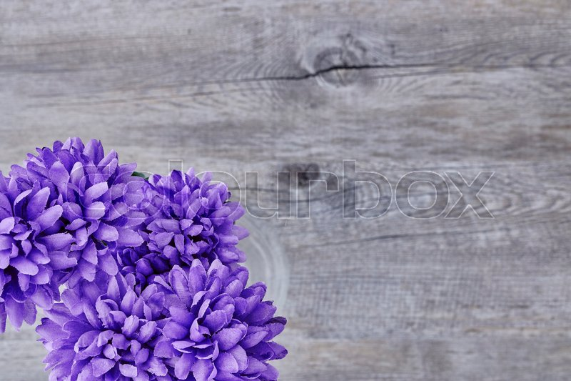 Stock image of 'A studio photo of plastic display flowers'