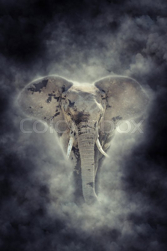 Stock image of 'Elephant in National park of Kenya, Africa. Elephant in smoke'