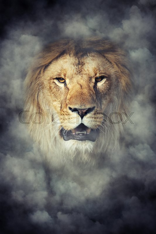 Stock image of 'Close male lion in smoke on dark background'