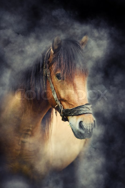 Stock image of 'Close brown horse in smoke on dark background'