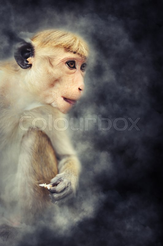 Stock image of 'Close young monkey in smoke on dark background'