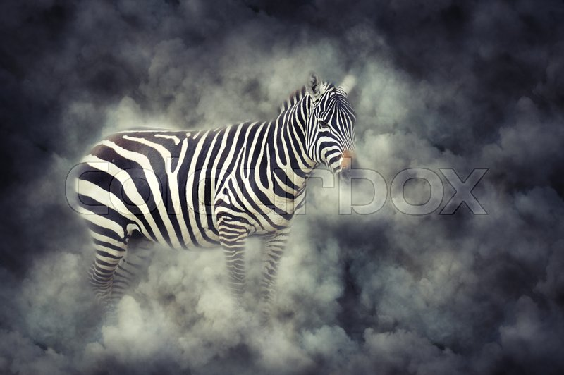 Stock image of 'Close up zebra in smoke on dark background'