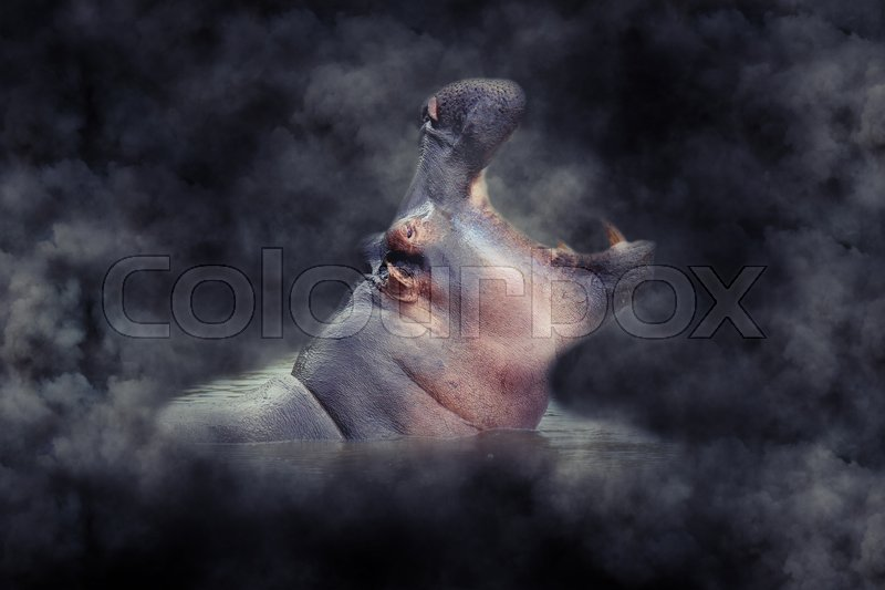 Stock image of 'Close up hippo in smoke on dark background'