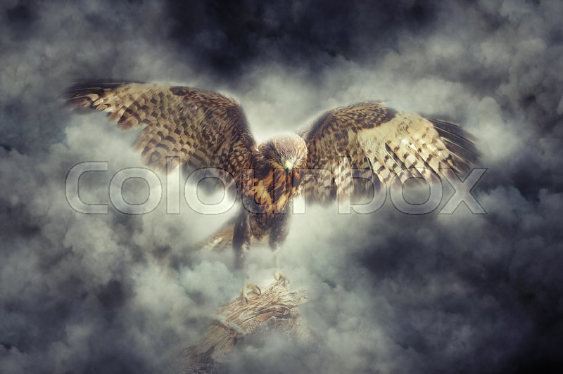 Stock image of 'Eagle on a branch in smoke on dark background'