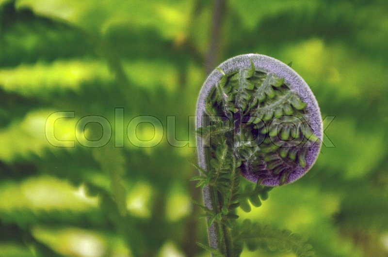 Stock image of 'fern like a fern in at a sunny day, closeup'
