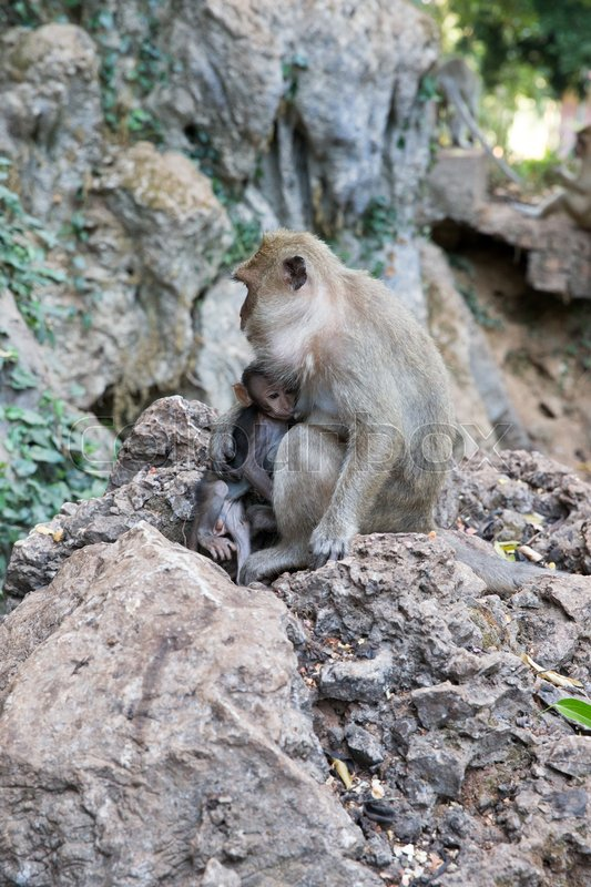 Stock image of 'Mother monkey with baby monkey with green background'