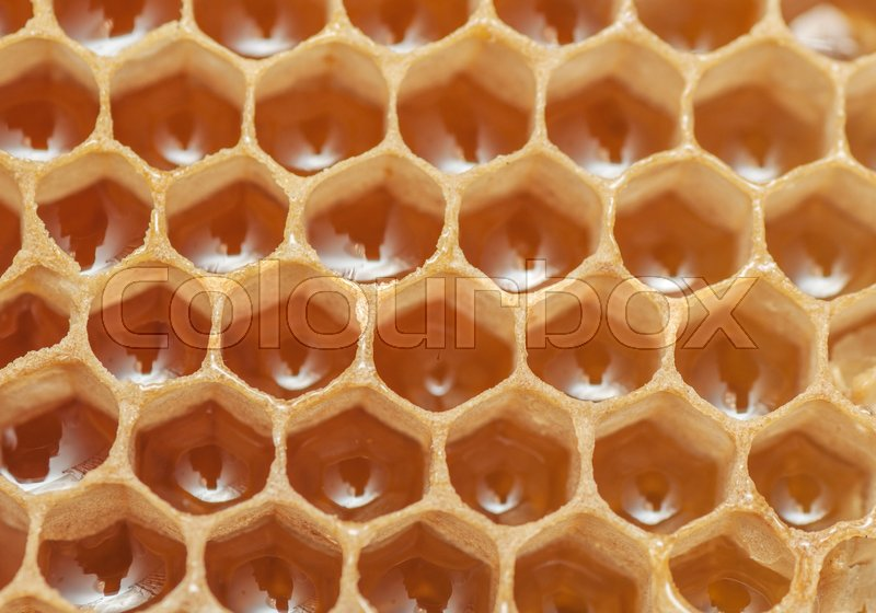 Stock image of 'Close up view of the honeycomb with sweet honey.'