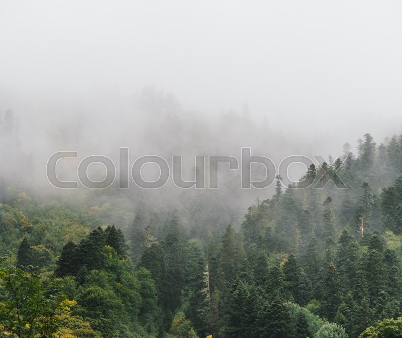 Stock image of 'Mist among woods in the mountains'