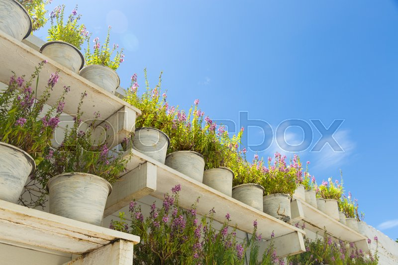 Stock image of 'Flower pot on the floor. Wooden shelves in the garden at the back is a bright sky.'