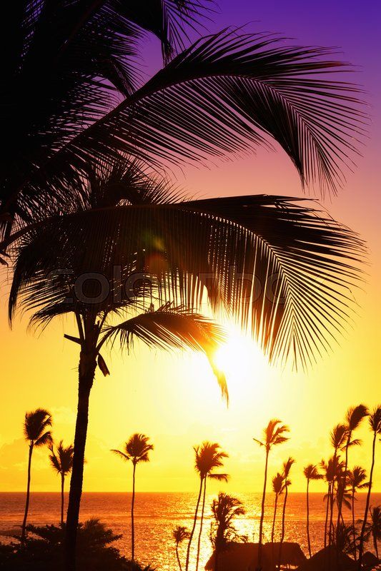 Stock image of 'Coconut palm trees against colorful sunset '