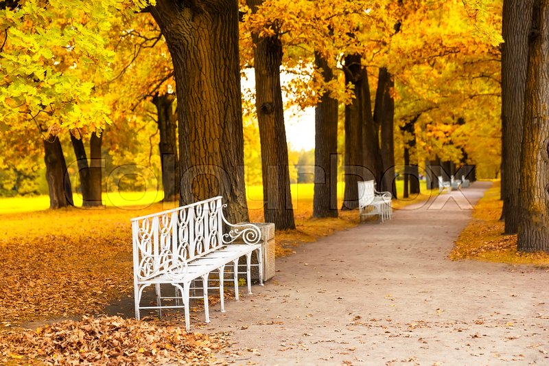 Stock image of 'White park bench in the park in fall time'