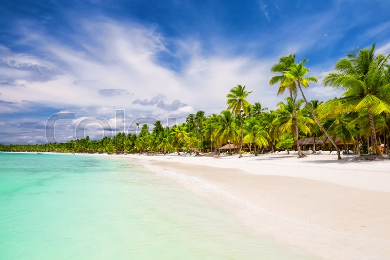 Stock image of 'Coconut Palm trees on white sandy beach in Punta Cana, Dominican Republic'