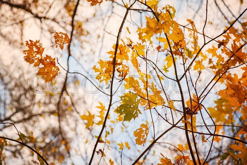 Stock image of 'Image of colorful autumn branches. '