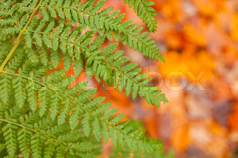 Stock image of 'Image of autumnal background with leaves and banches.'