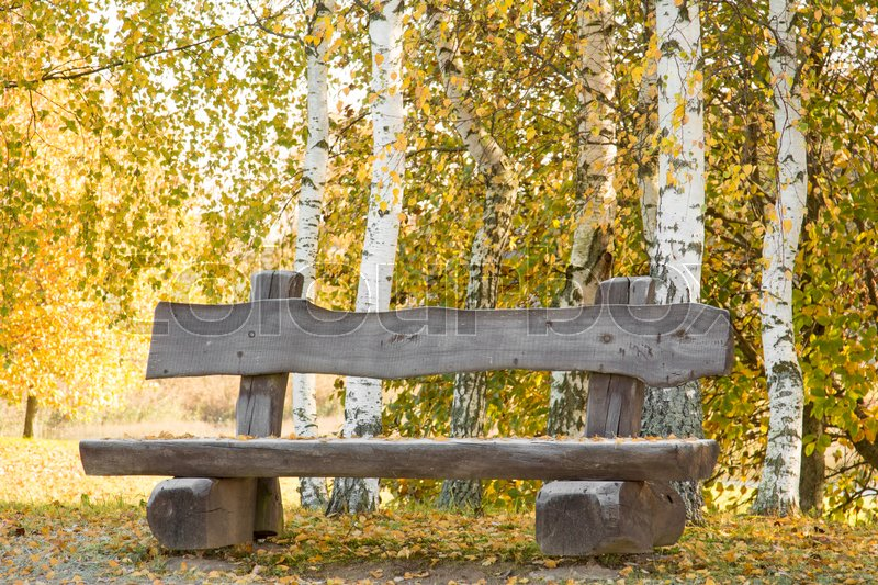 Stock image of 'Wooden bench on the autumn birch trees background'