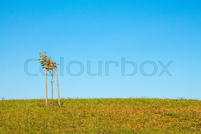 Stock image of 'Solitary tree on grassy hill and blue sky in the background'