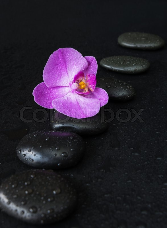 Stock image of 'Spa concept with black basalt massage stones arranged chain and purple orchid flower covered with water drops on a black background'
