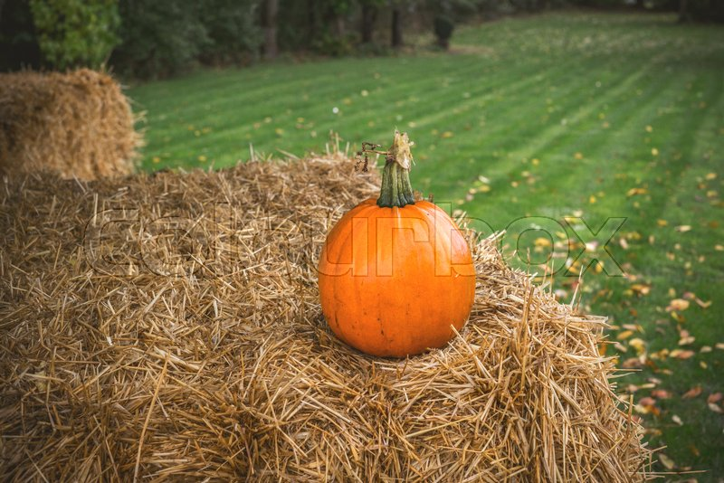 Stock image of 'Pumpkin in rural environment on a bale in autumn'