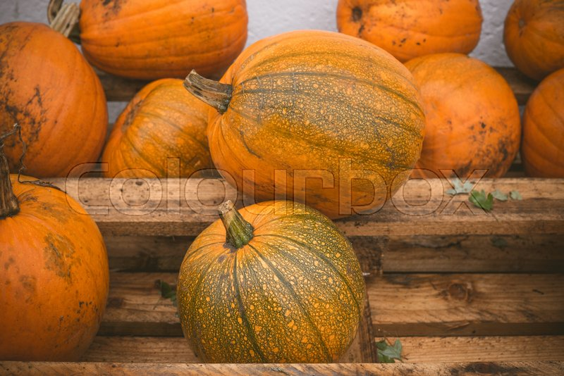 Stock image of 'Orange pumpkins stacked on a wooden shelf at a festival'
