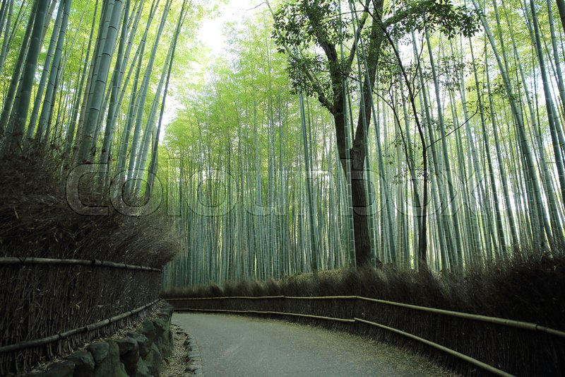 Stock image of 'Bamboo Forest with walkway in Kyoto Japan'