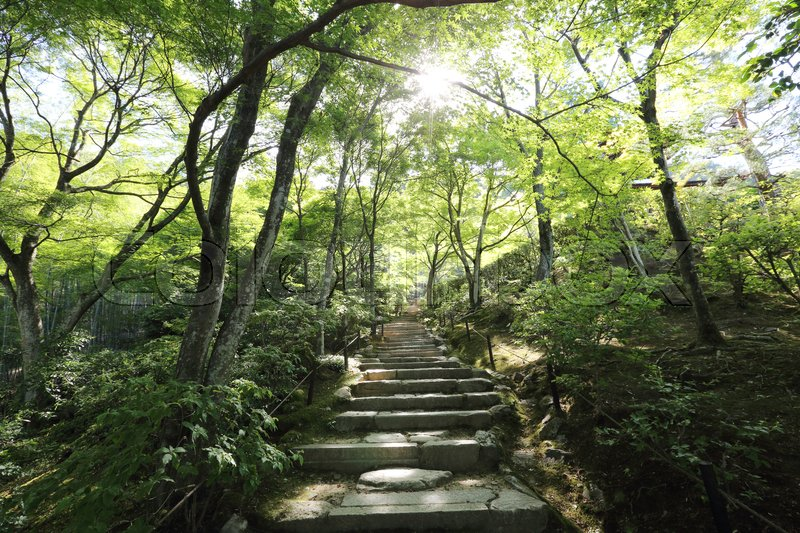Stock image of 'Japanese walkway in green Garden trees'